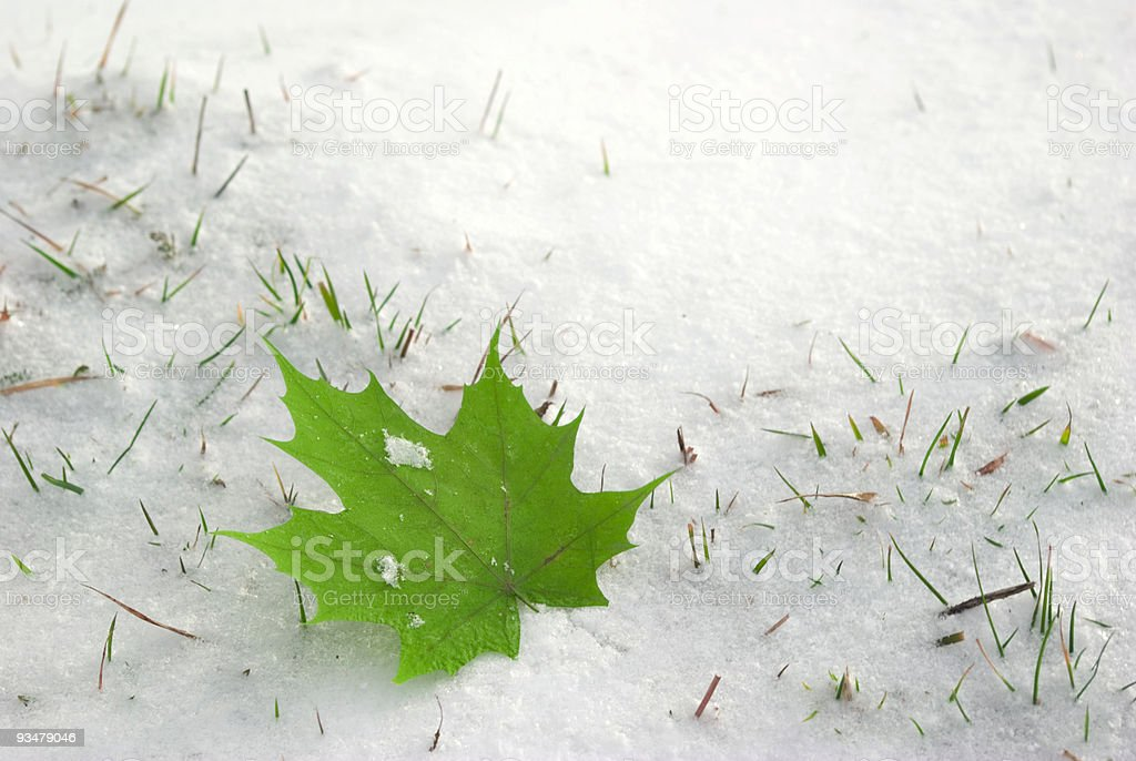 leaf on to snow royalty-free stock photo