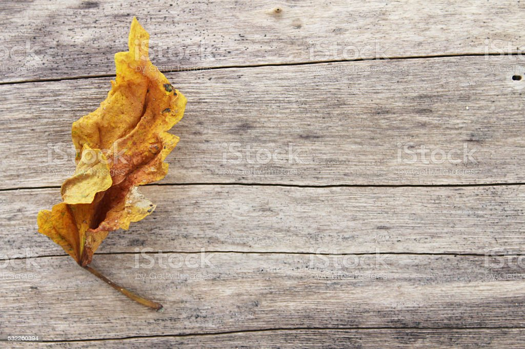 leaf on wooden background stock photo