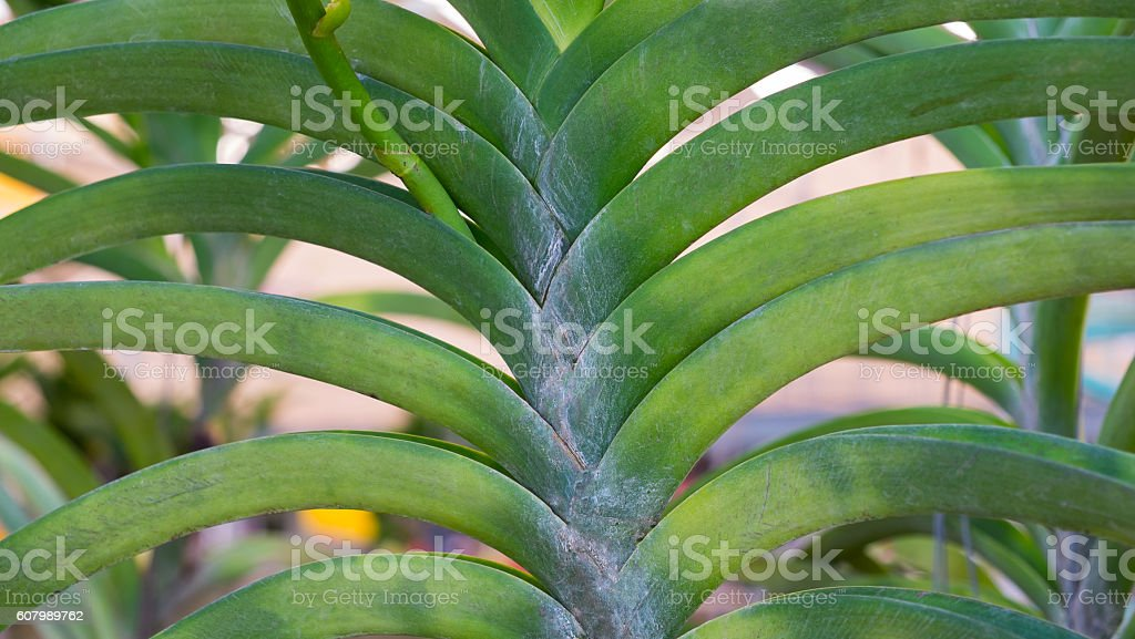 leaf orchids background Lizenzfreies stock-foto