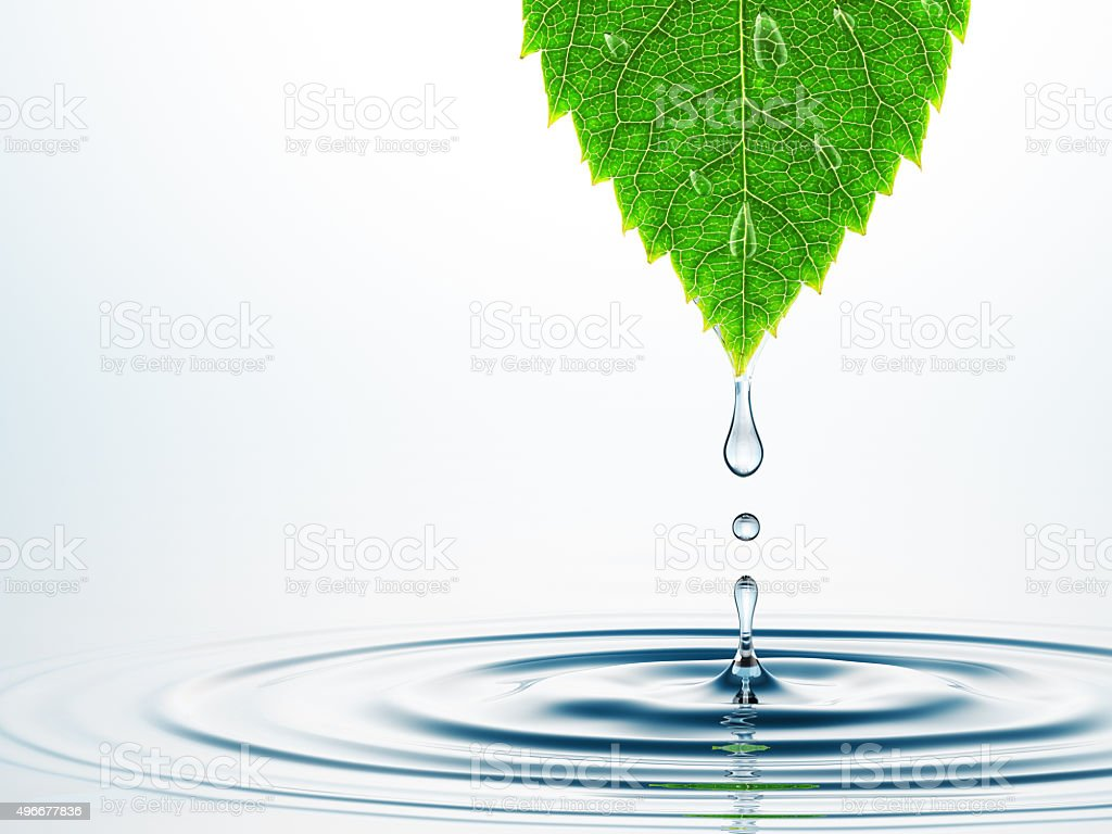Leaf Over Water stock photo