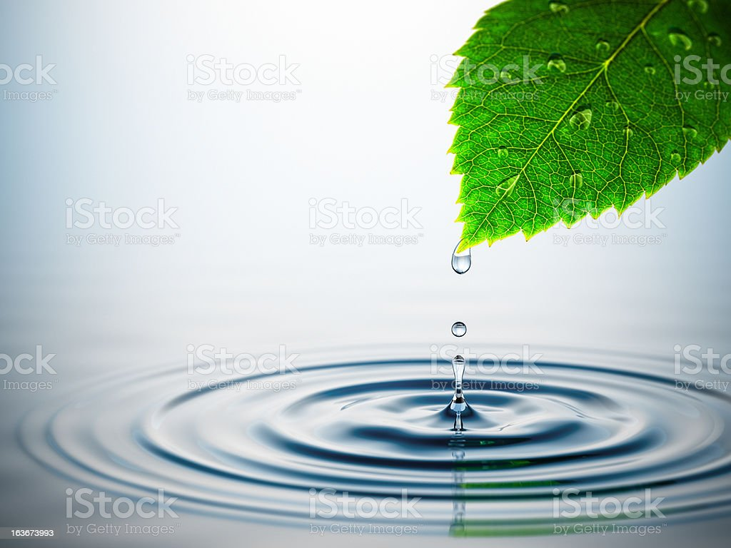 Leaf Over Water Splash stock photo