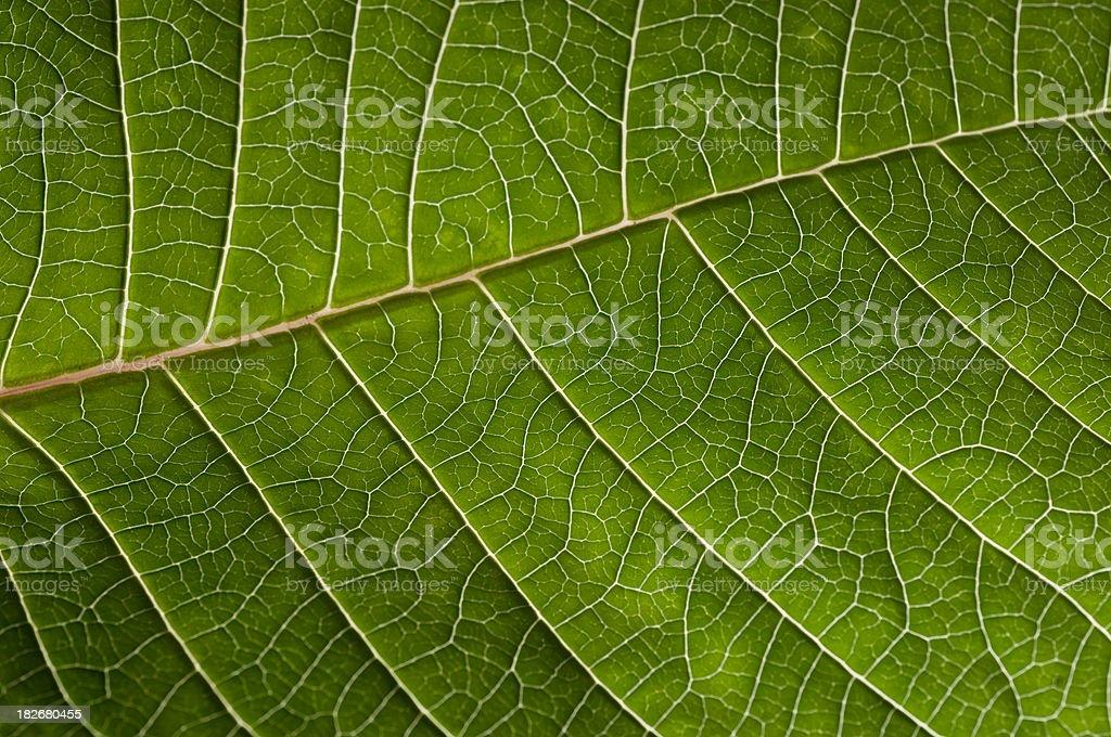 Leaf Pattern 3 royalty-free stock photo