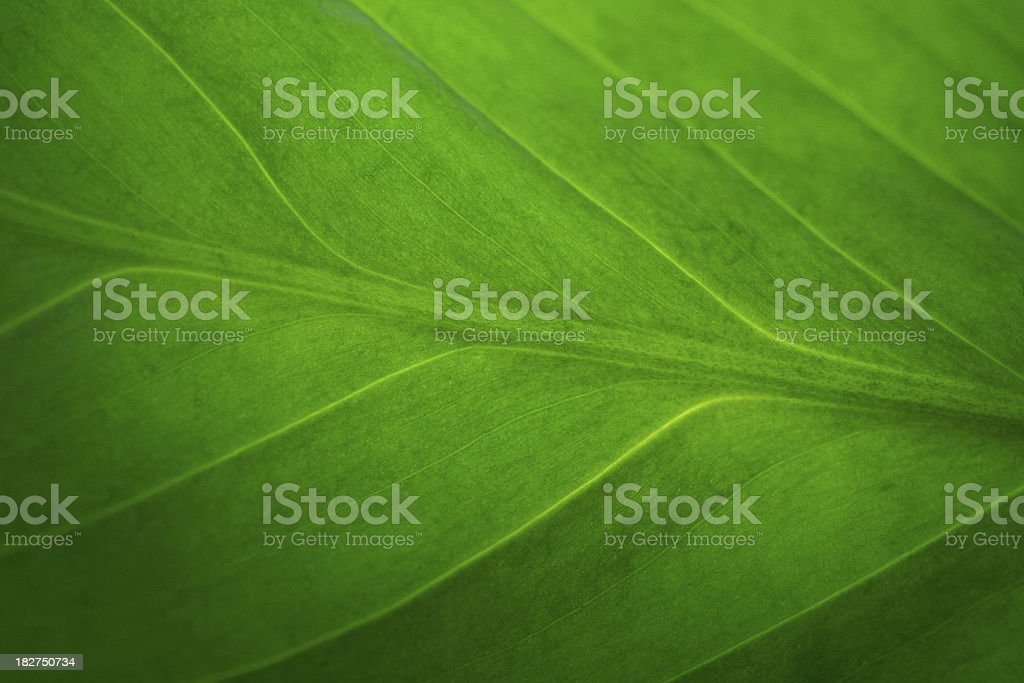 Leaf pattern background royalty-free stock photo