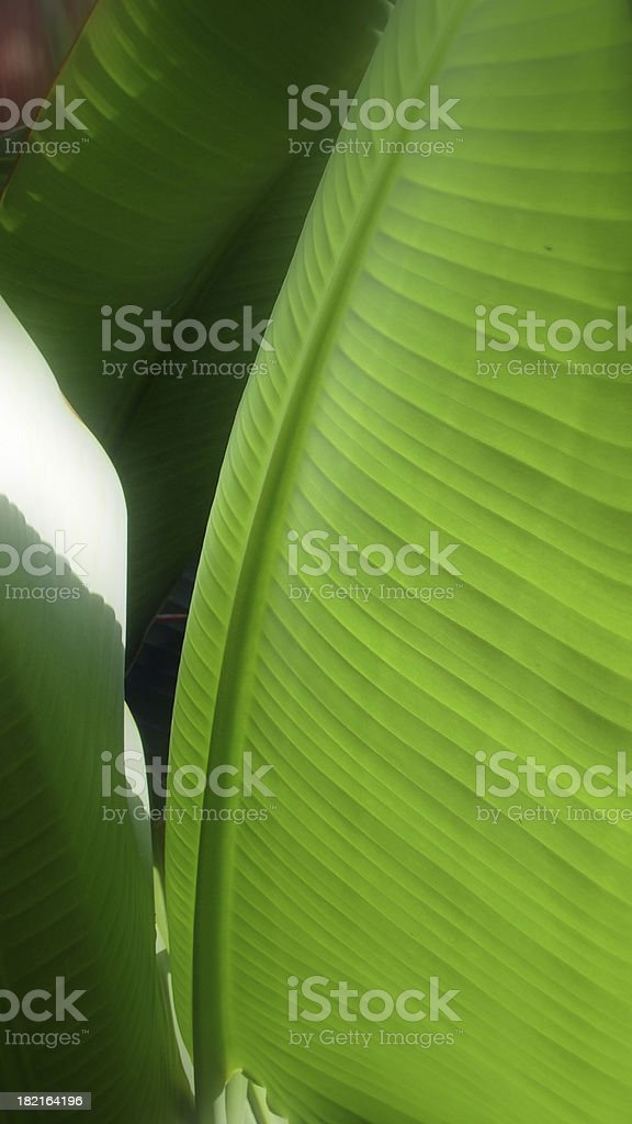 Leaf Pattern royalty-free stock photo