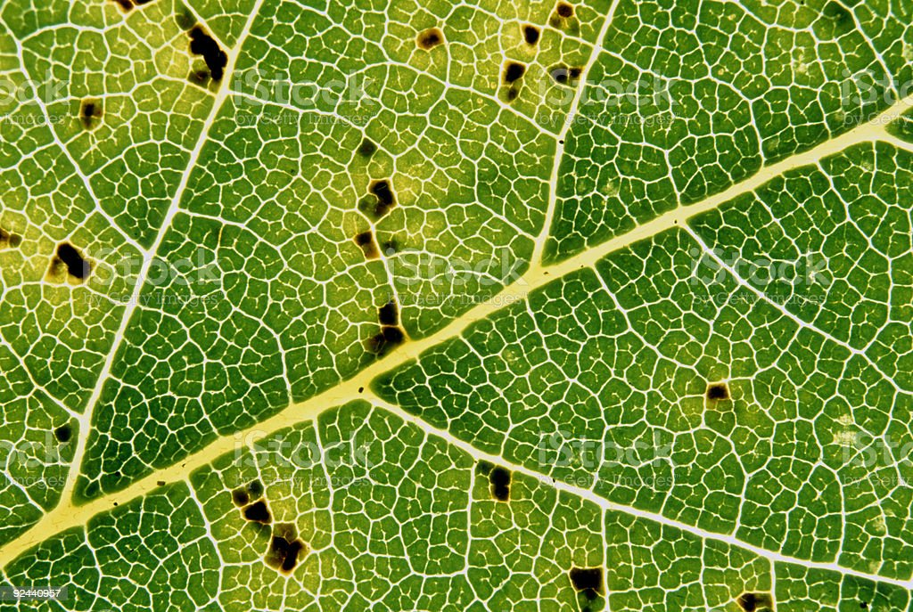 leaf patterns stock photo
