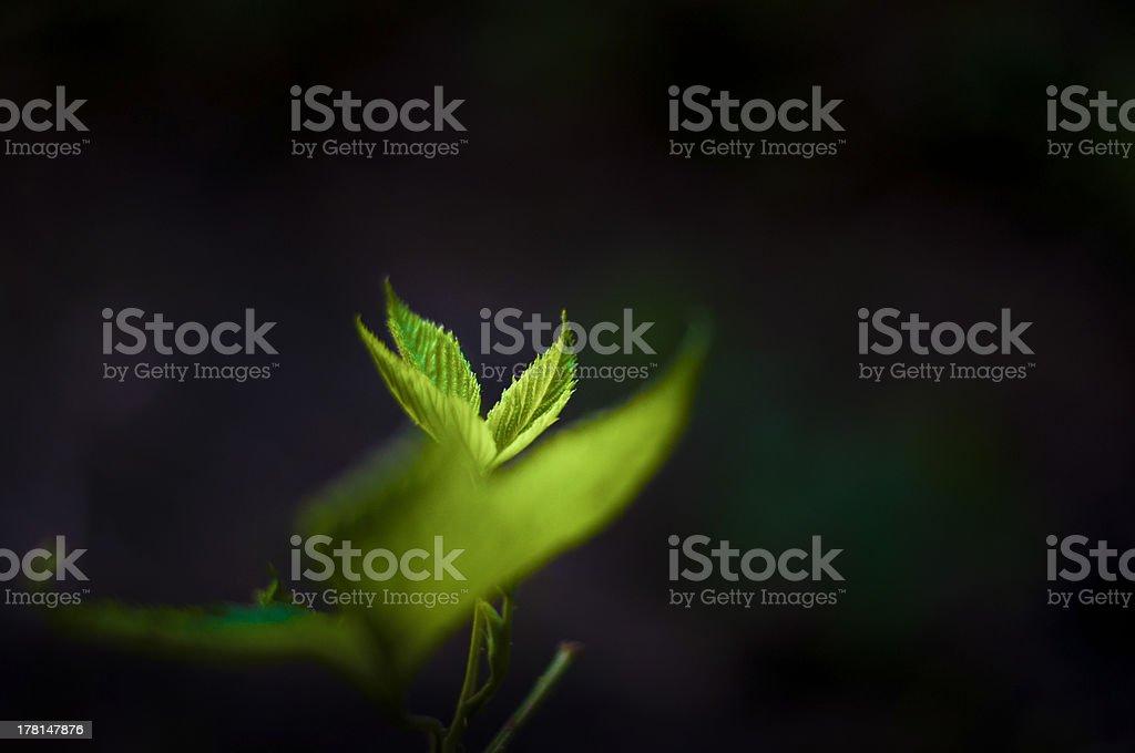 Leaf Lizenzfreies stock-foto