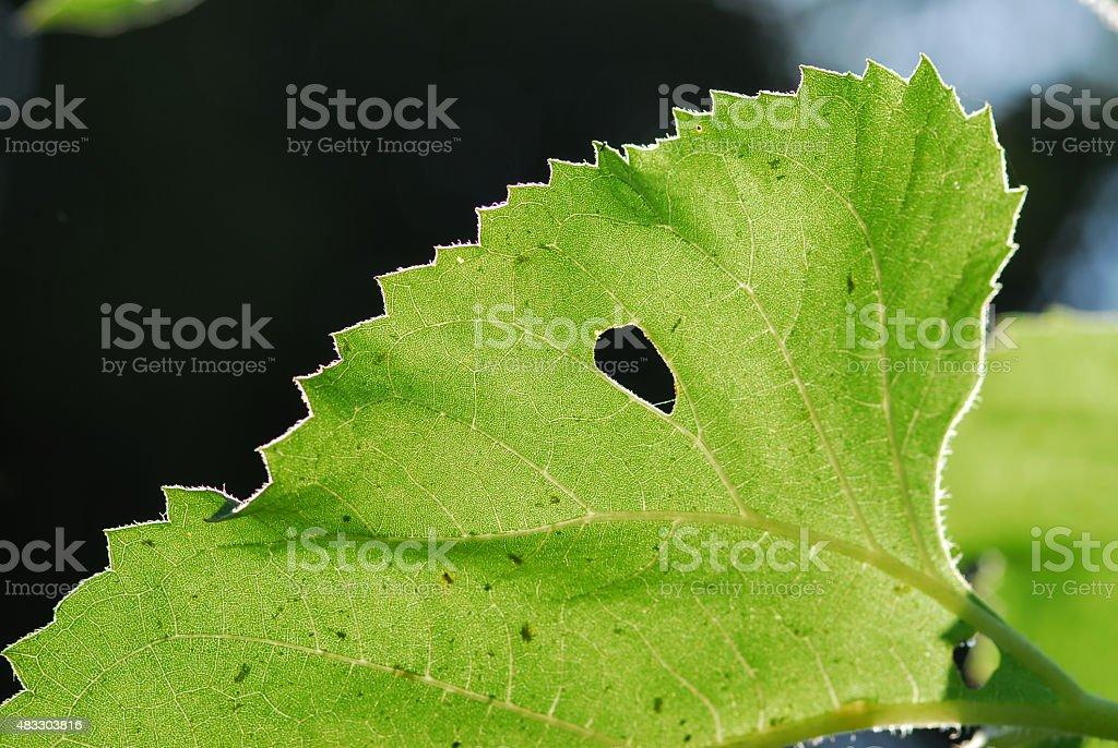 leaf zbiór zdjęć royalty-free