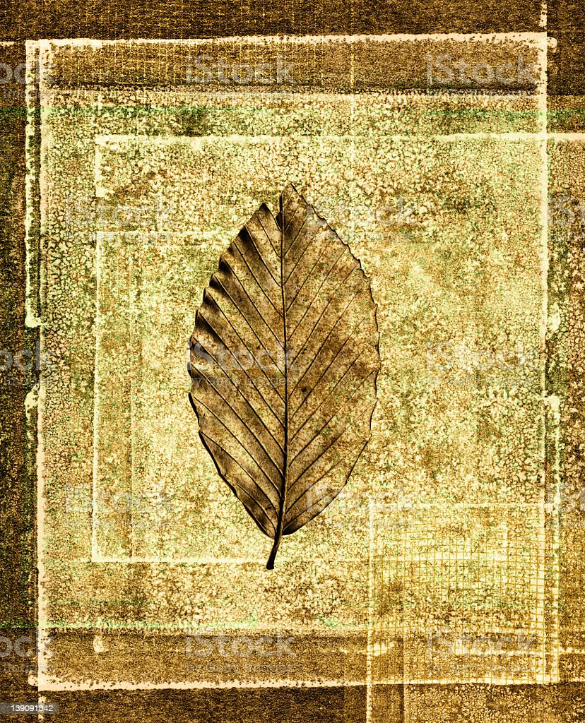 leaf print collage on a textured background stock photo