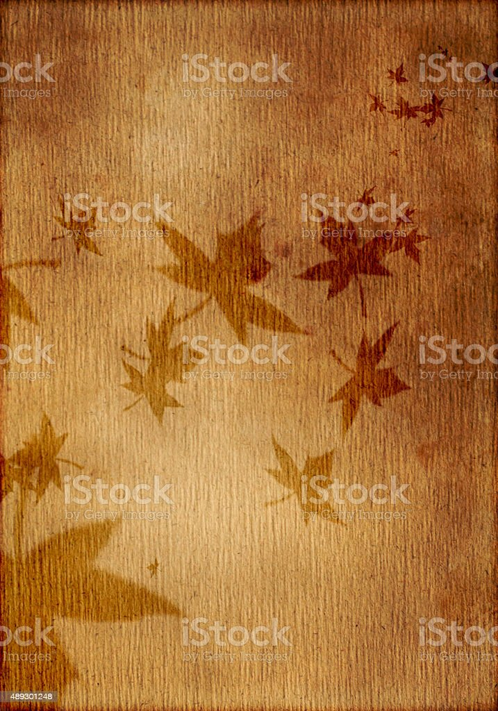 leaf samples on the old brown paper stock photo