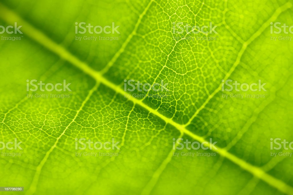 Leaf Series stock photo