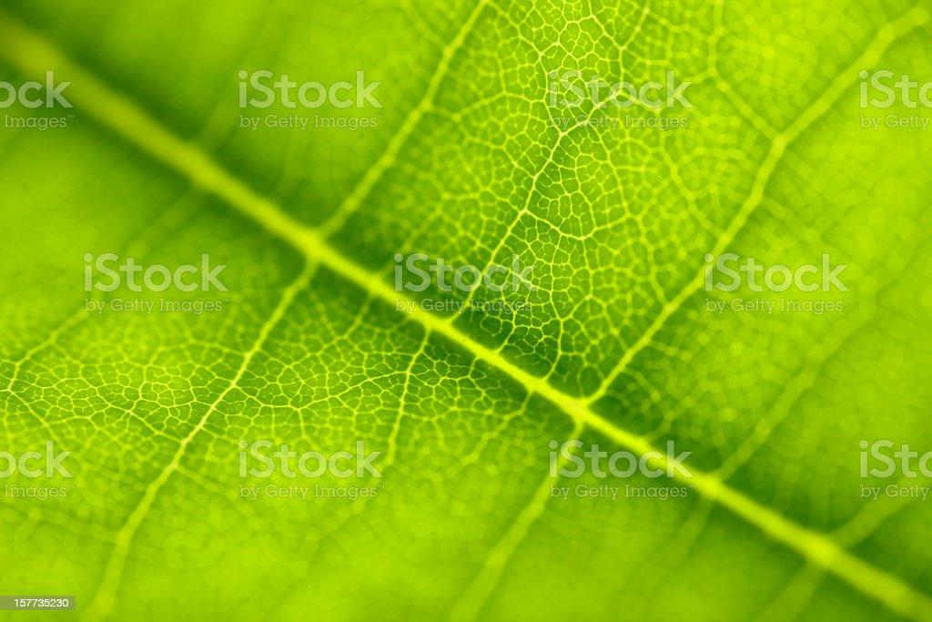 Leaf Series stock photo