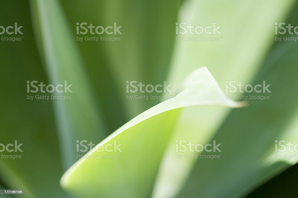 Leaf softness royalty-free stock photo