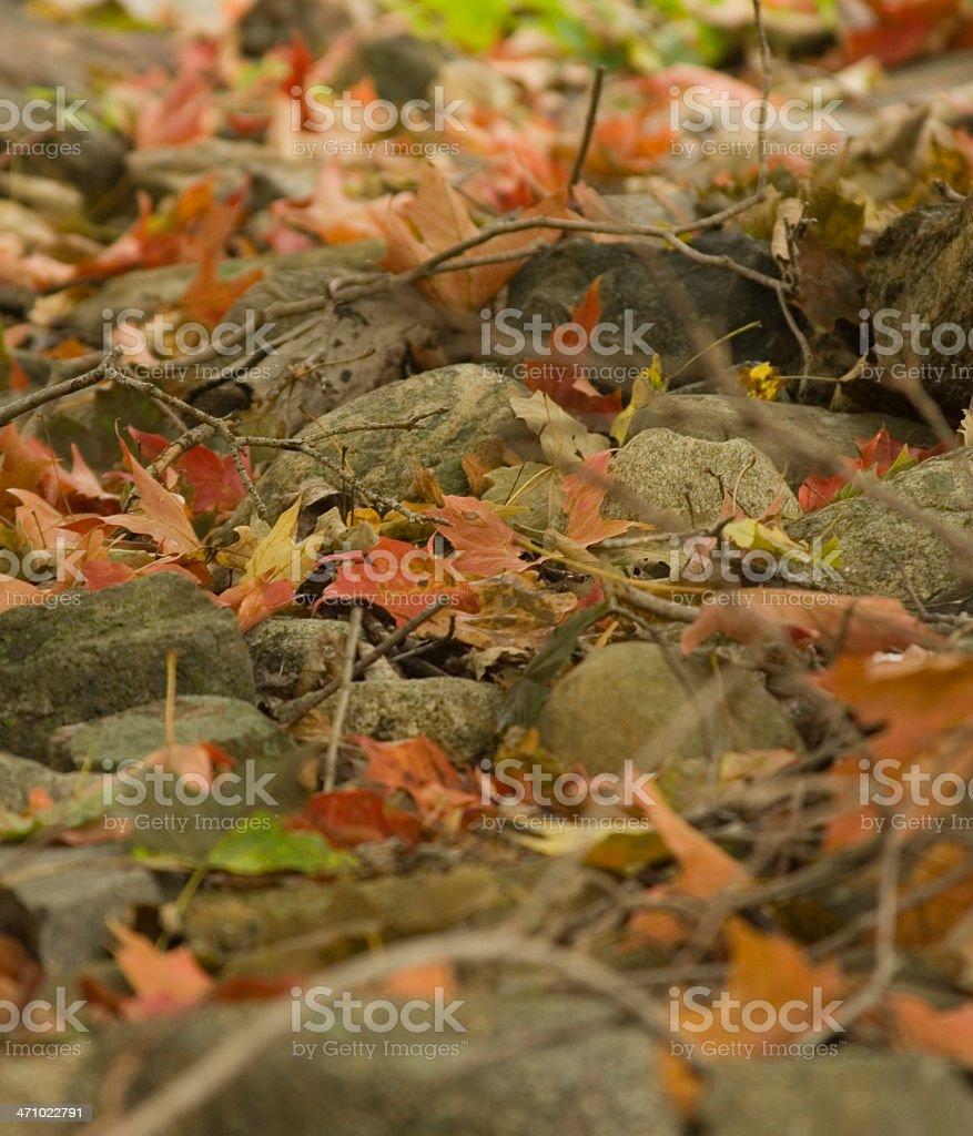 Leaf Stones royalty-free stock photo