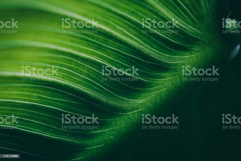 Leaf surface macro , shallow DOF stock photo