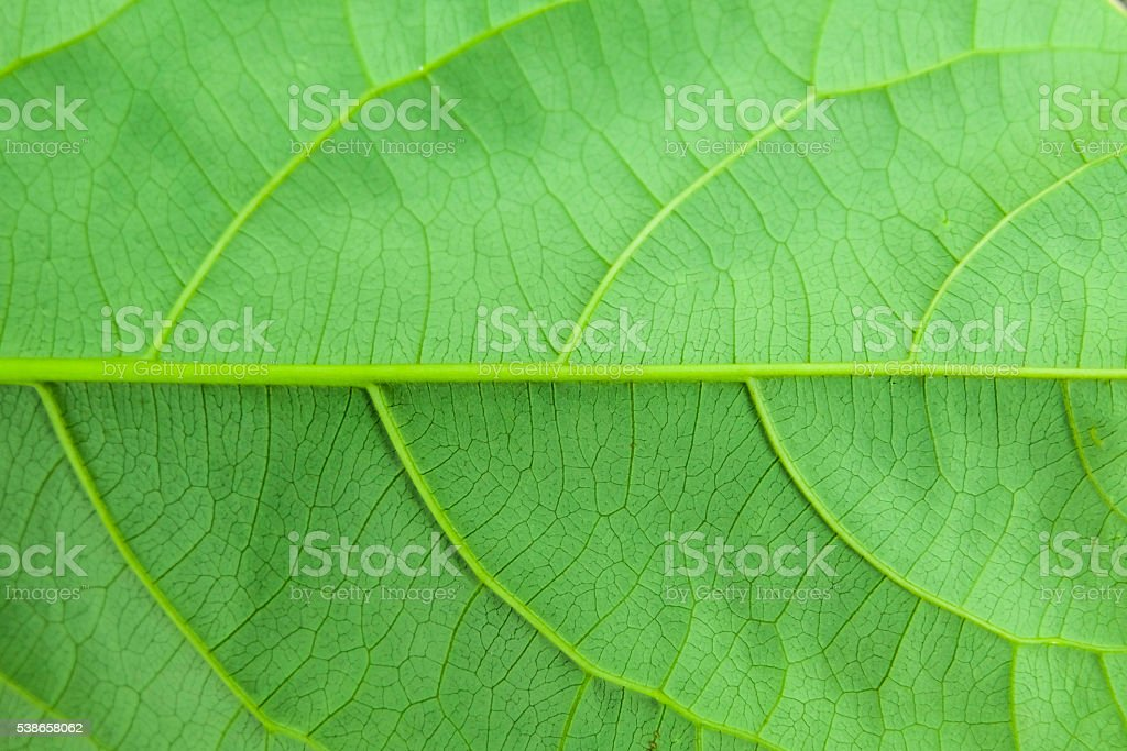 leaf texture. Abstract leaf background. stock photo