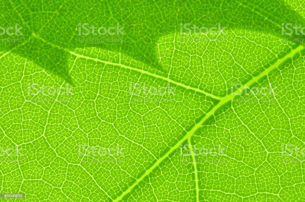Leaf texture macro stock photo