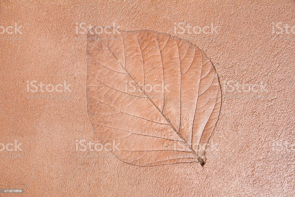 Leaf texture on floor royalty-free stock photo