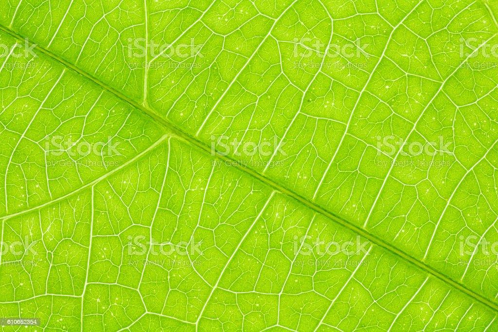 Leaf texture or leaf background for design. stock photo