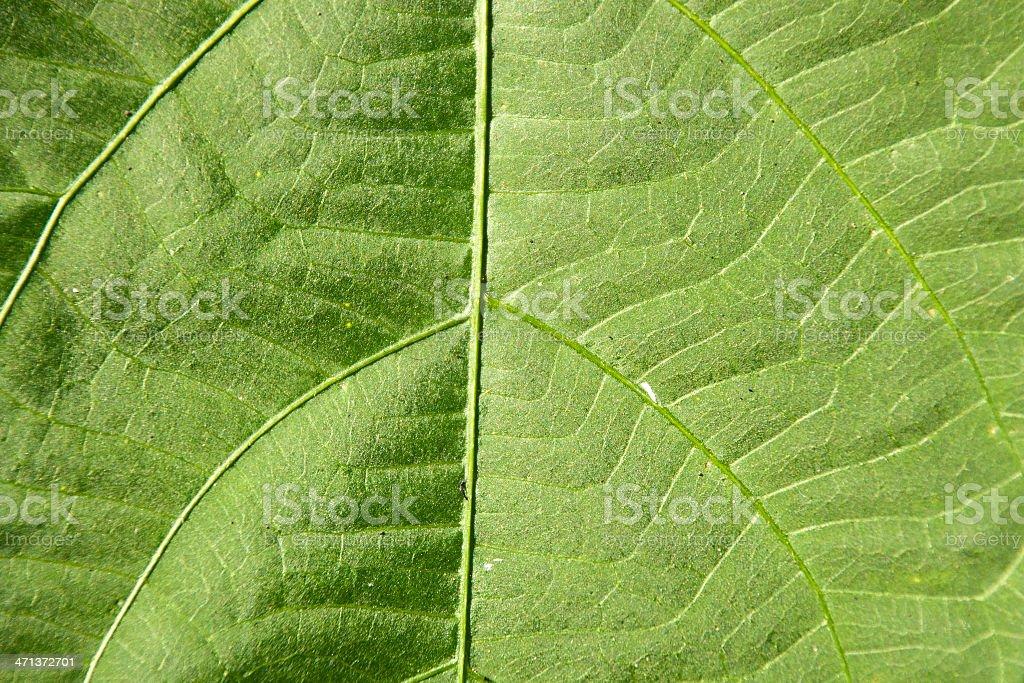 leaf tekstura płótna zbiór zdjęć royalty-free