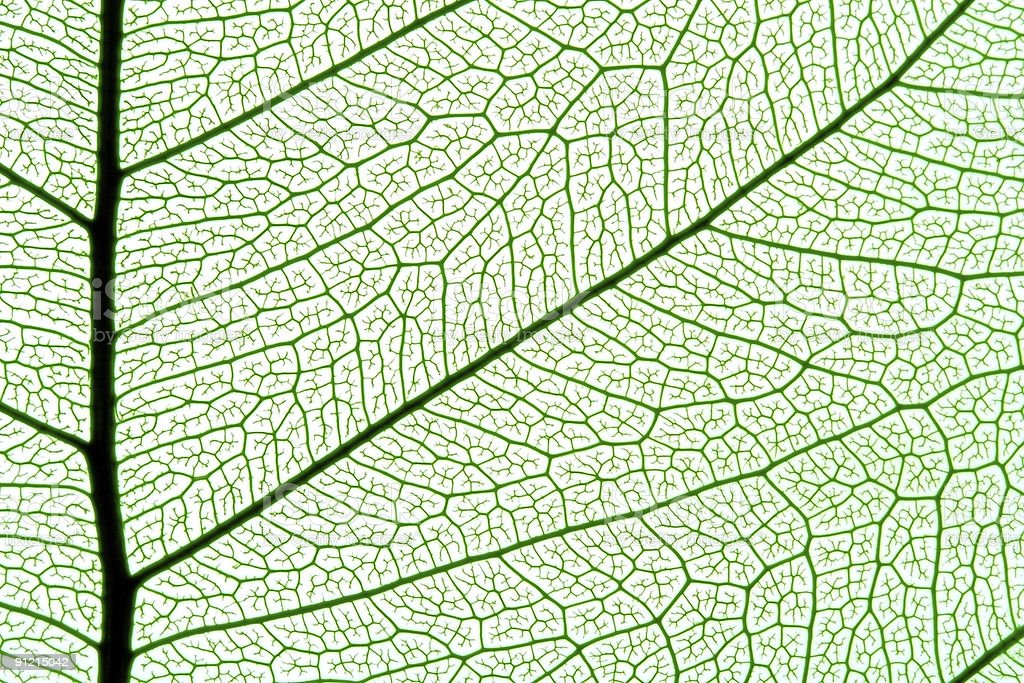 leaf texture royalty-free stock photo