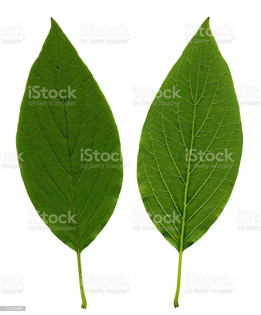 Leaf texture XXL stock photo