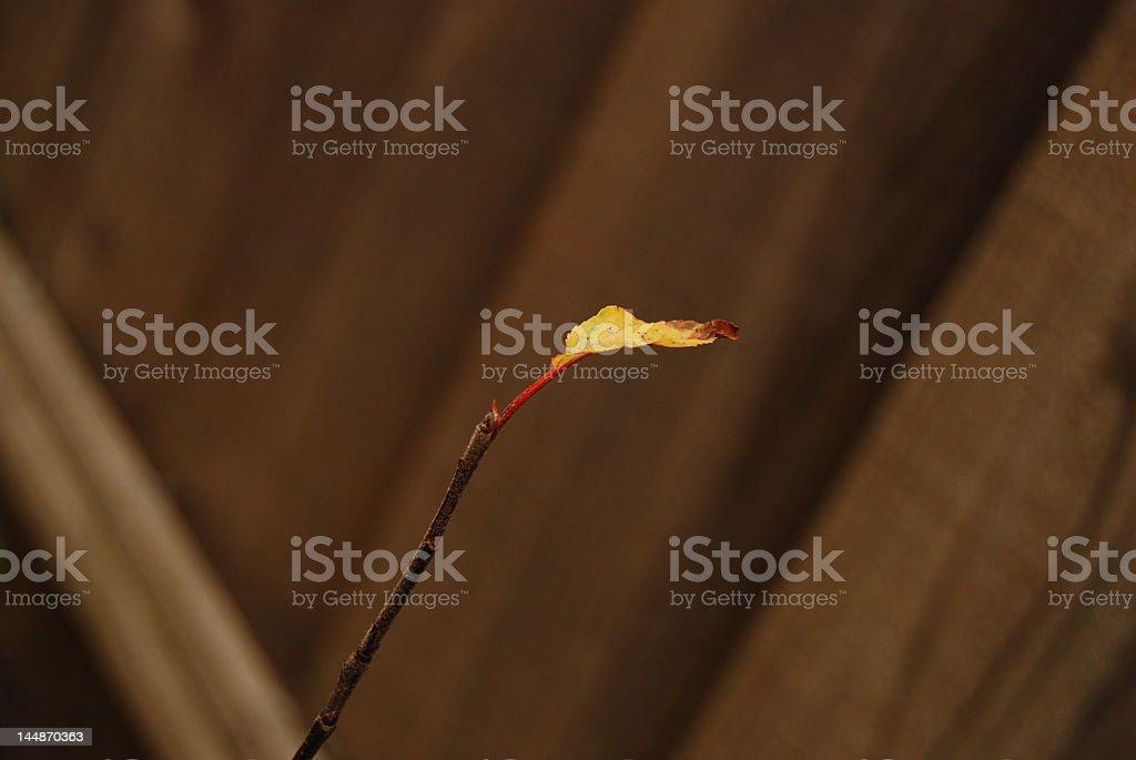 Feuilles d'automne qui est sur le point de photo libre de droits