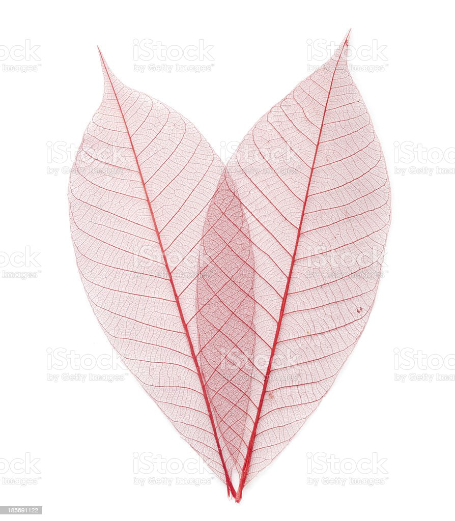 leaf transparent background. royalty-free stock photo