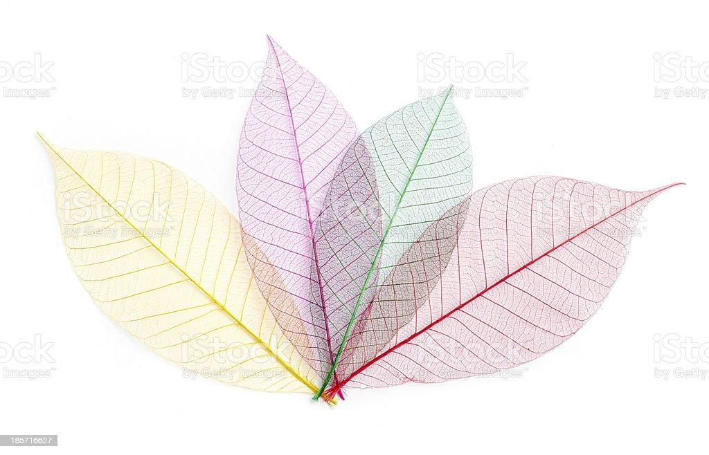 leaf transparent background. royalty-free stock photo