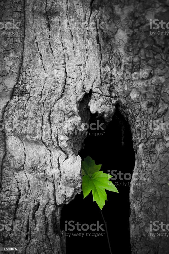 Leaf tree green mystery royalty-free stock photo