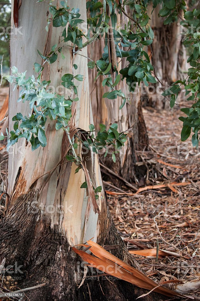 Leaf, Trunk and Litter stock photo