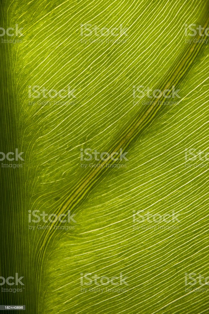 leaf underside 1 stock photo