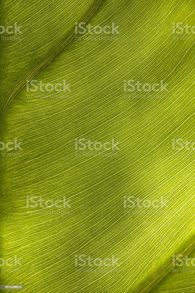 leaf underside 2 stock photo
