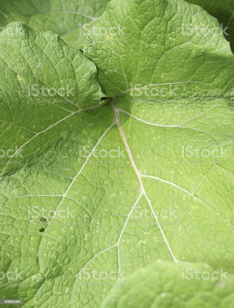 Leaf Up Close stock photo