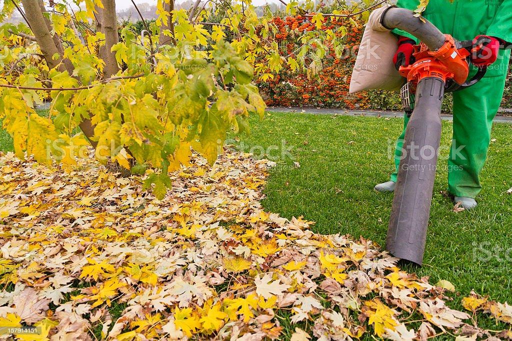 Leaf Vacuum stock photo