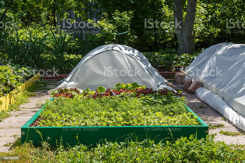 Leaf vegetable. Cilantro, parsley, dill and  lettuce stock photo