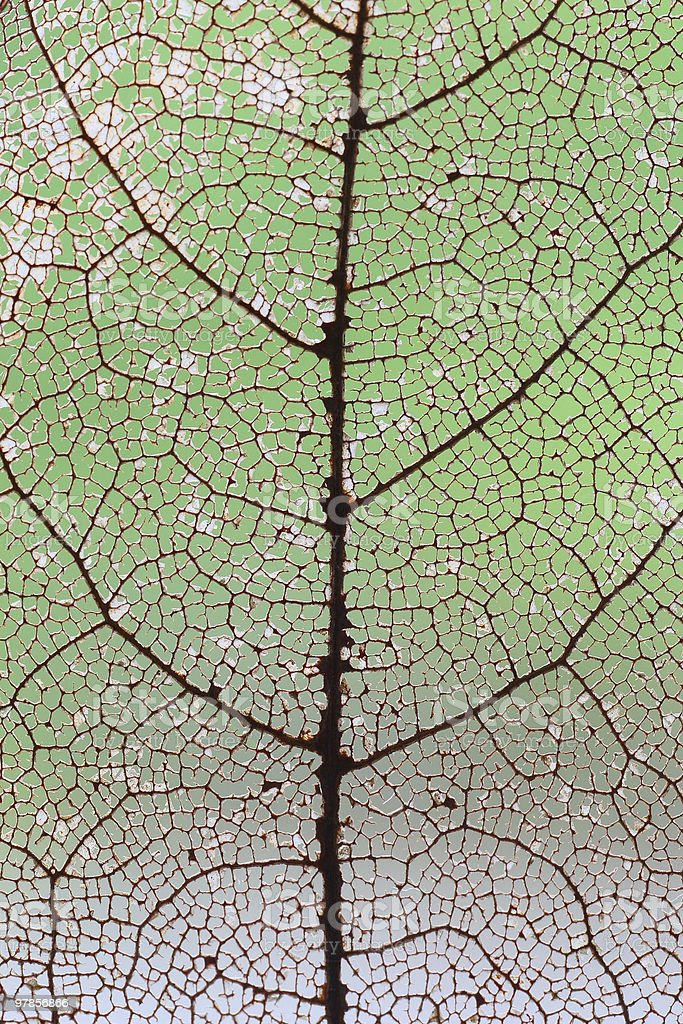 Leaf vein royalty-free stock photo