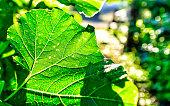 Leaf Veins and Plant Bokeh in Urban Garden