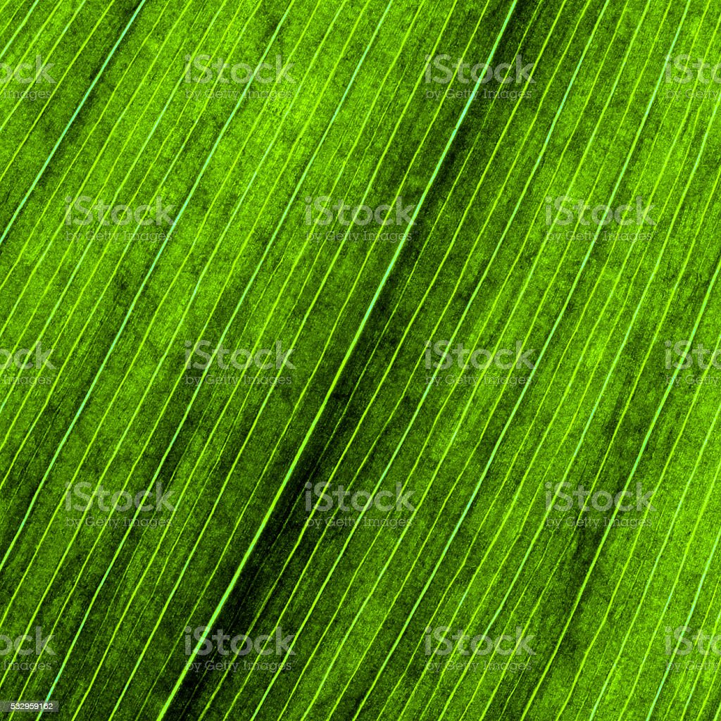 Leaf veins Close-up Background stock photo