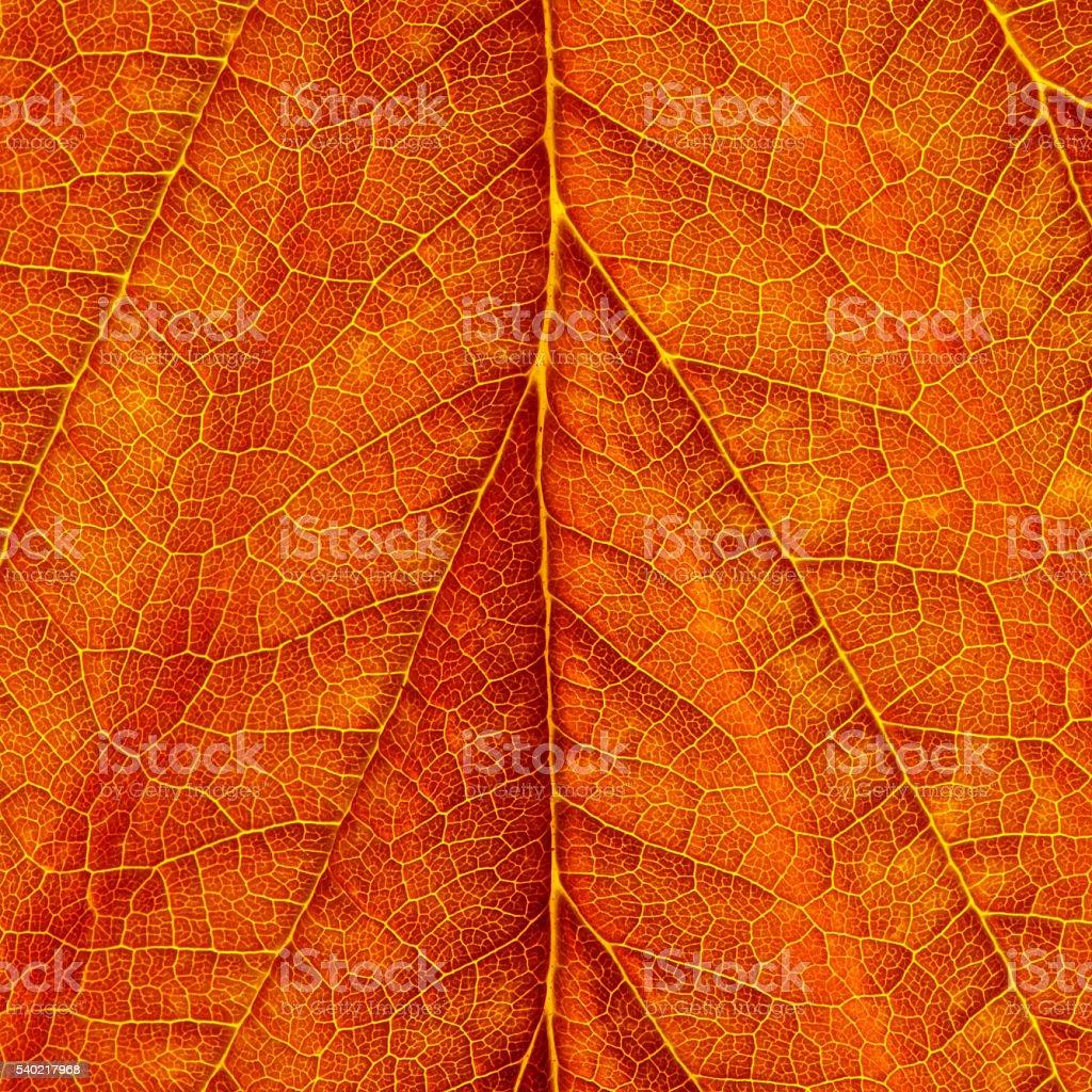Leaf veins Close-up Background stock photo