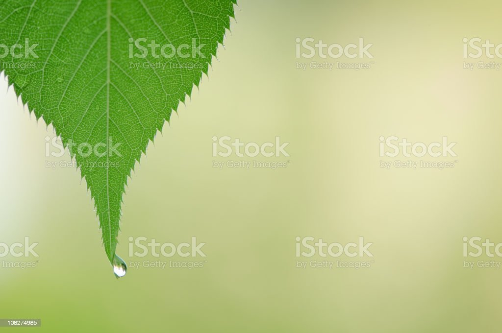 Leaf with dew drop royalty-free stock photo