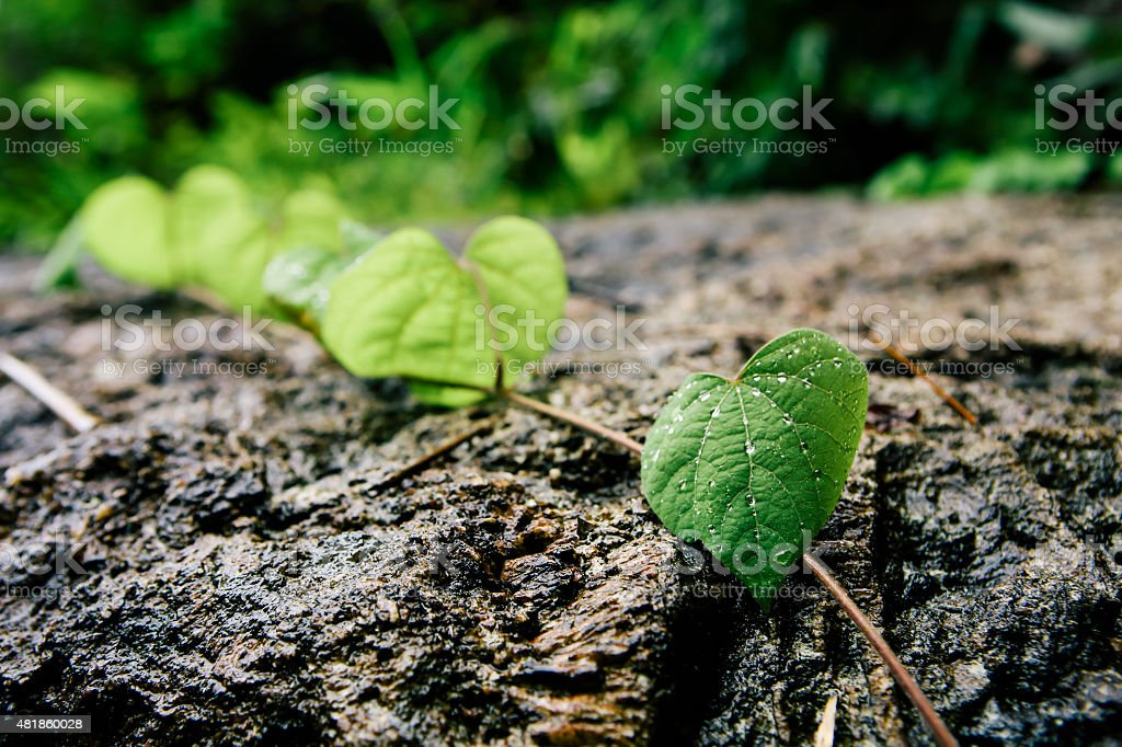Leaf with droplets on the rock. stock photo