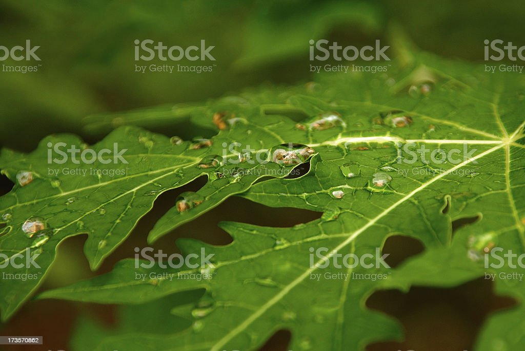 leaf with droplets stock photo