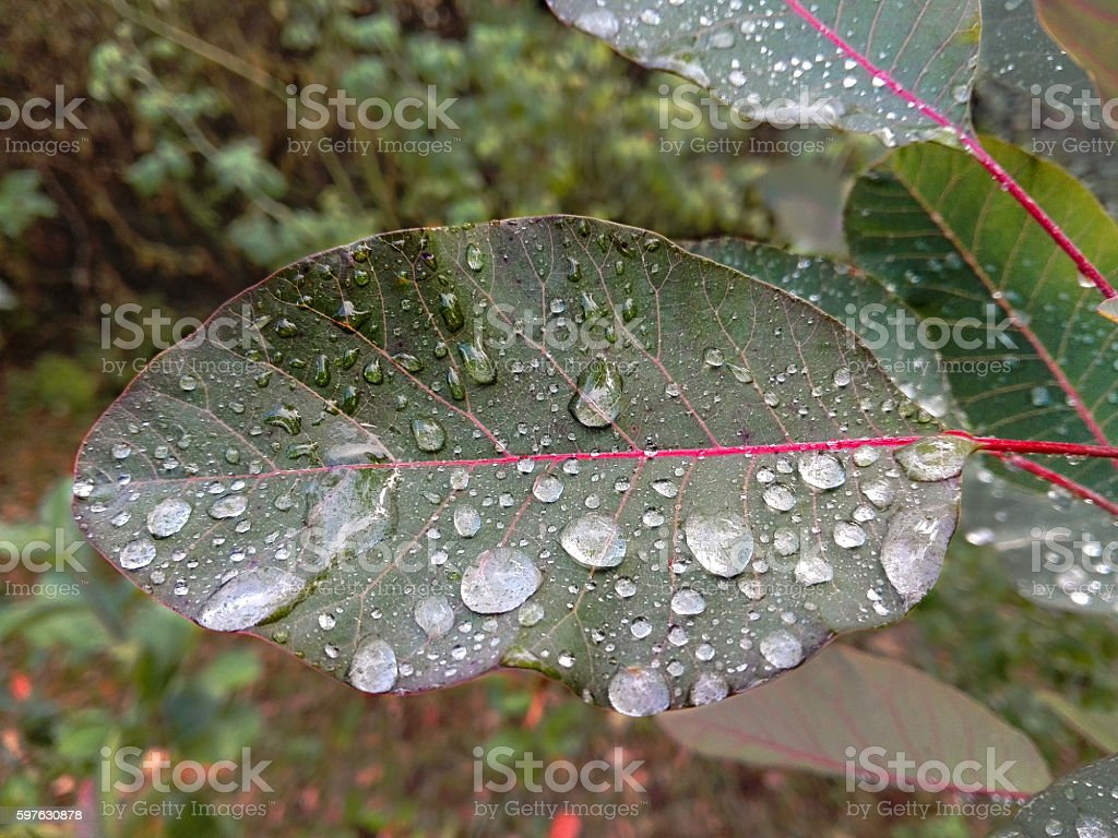 leaf with drops of rainwater stock photo