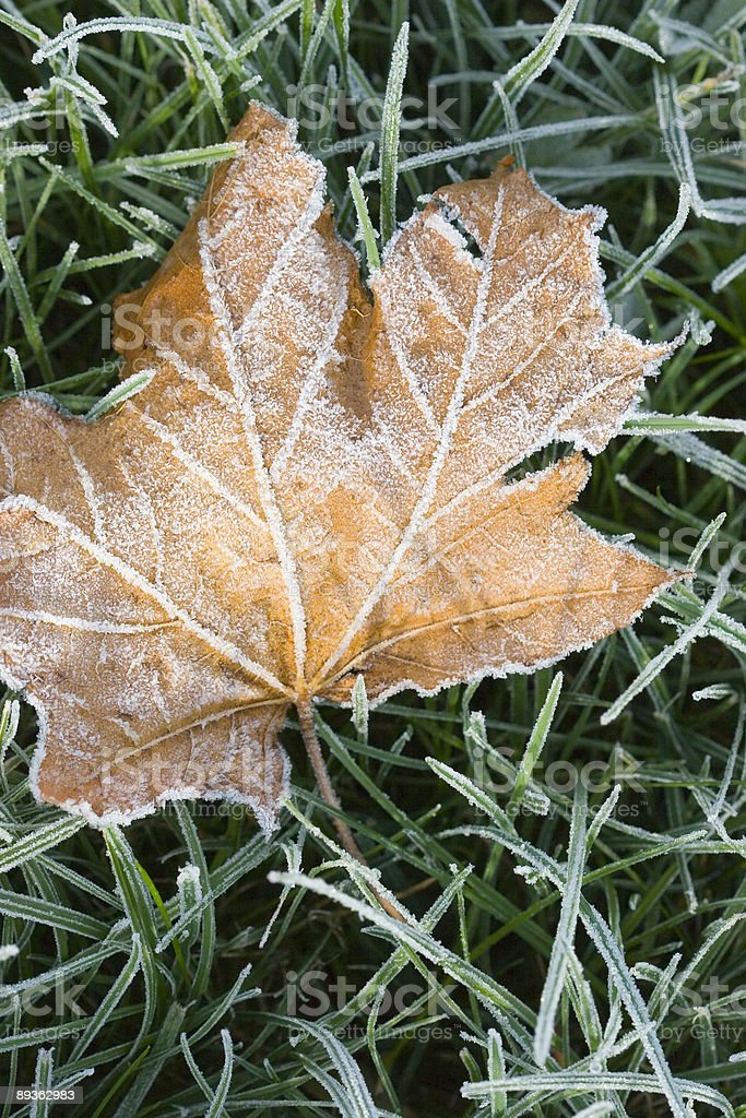 Leaf with Frost royalty-free stock photo