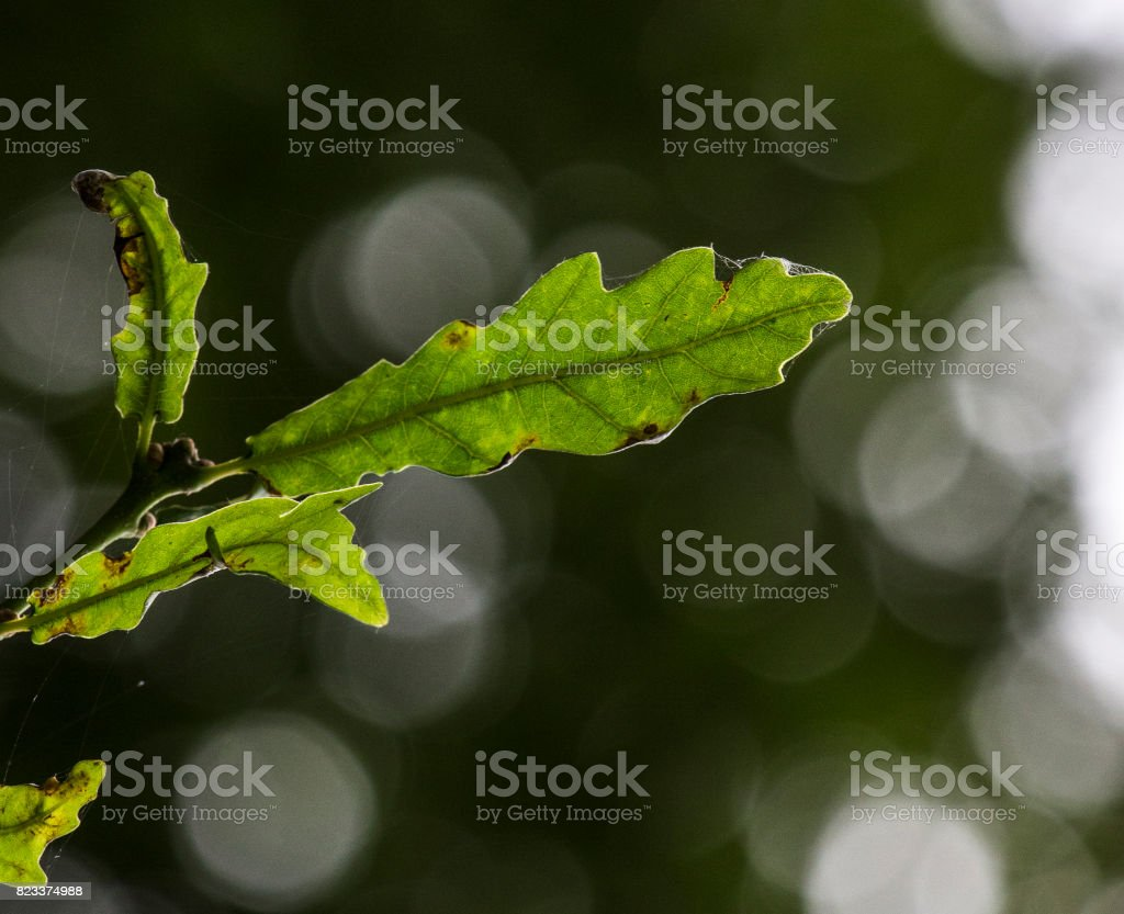 Leaf with out of focus background stock photo
