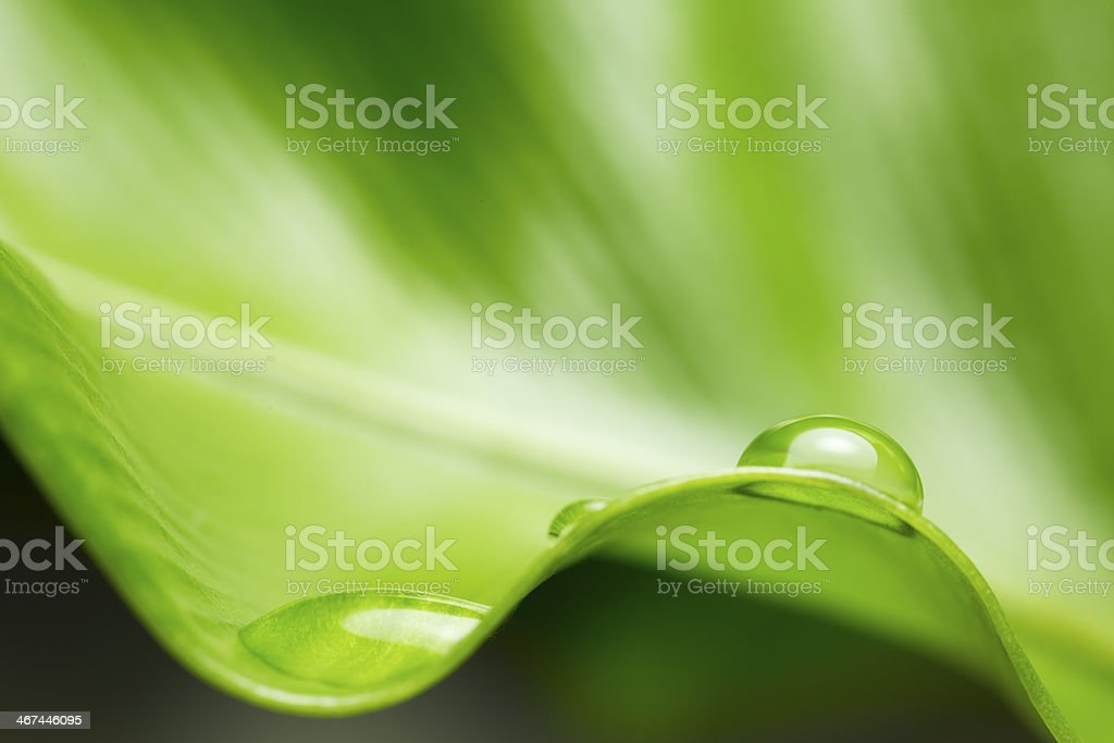 leaf with rain drop stock photo