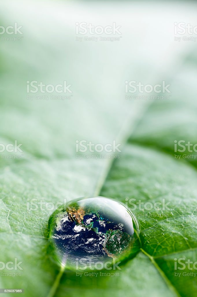 leaf with rain drop  - Recovery  earth concept stock photo