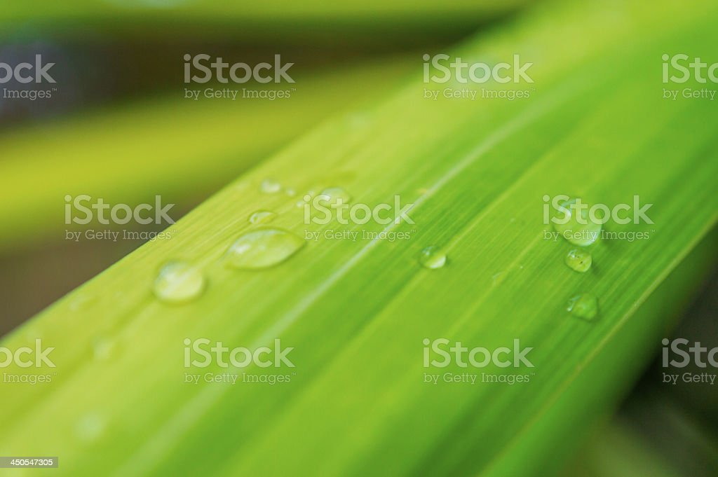 leaf with rain droplets 06 royalty-free stock photo