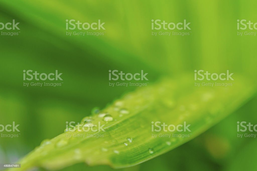 leaf with rain droplets 07 royalty-free stock photo