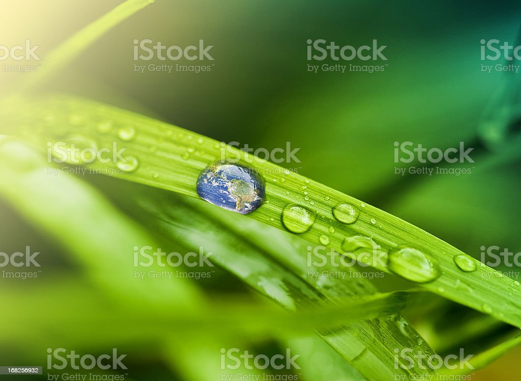 Leaf with rain droplets royalty-free stock photo